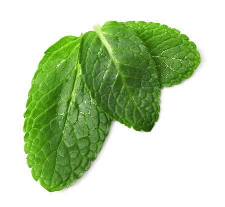 Wet leaves of fresh mint isolated on white, top view