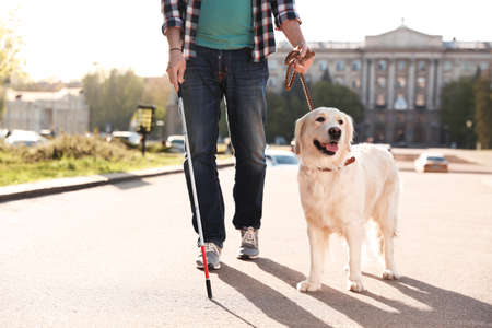 Guide dog helping blind person with long cane walking outdoors 스톡 콘텐츠