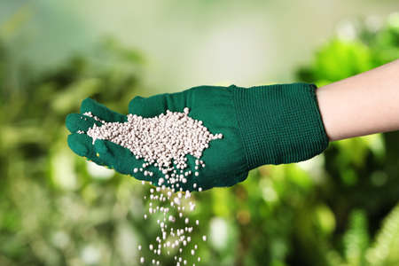 Woman in glove pouring fertilizer on blurred background, closeup. Gardening time