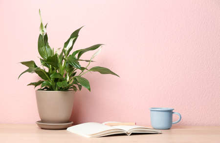 Potted peace lily plant, cup and notebook on wooden table near color wall. Space for text Foto de archivo