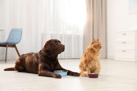 Gato y perro con comederos juntos en el interior. Amigos mullidos