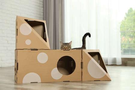 Cute tabby cat near cardboard house in room. Friendly pet