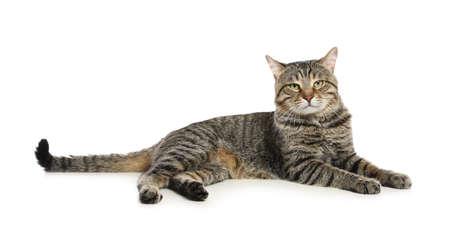 Nette getigerte Katze getrennt auf weißem Hintergrund. Freundliches Haustier Standard-Bild