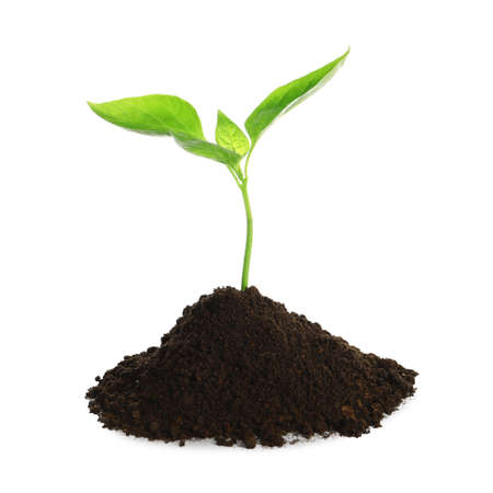 Young plant and pile of fertile soil on white background. Gardening time