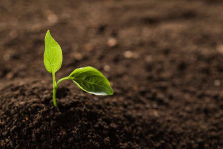 Young plant in fertile soil, space for text. Gardening time Stock fotó