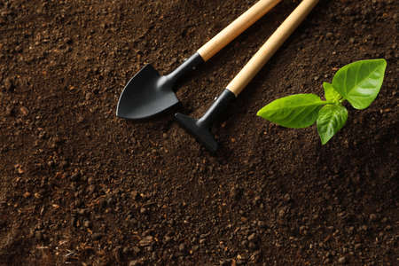 Flat lay composition with young plant and gardening tools on fertile soil, space for text