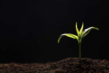 Young seedling in soil on black background, space for text