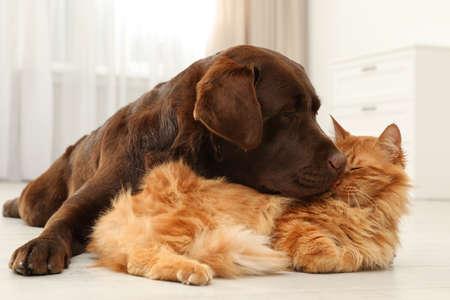 Perro y gato juntos en el piso en el interior. Amigos mullidos