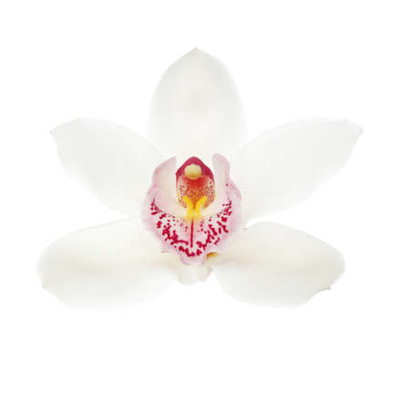 Beautiful tropical orchid flower on white background