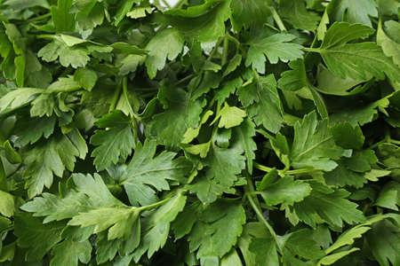 Fresh green organic parsley as background, closeup