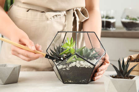 Young woman making florarium of different succulents at table, closeup Stockfoto