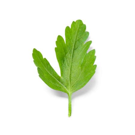 Fresh green organic parsley on white background 版權商用圖片