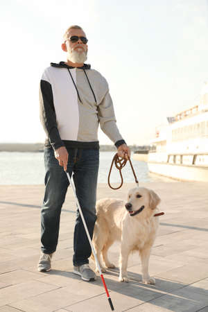 Guide dog helping blind person with long cane walking in city
