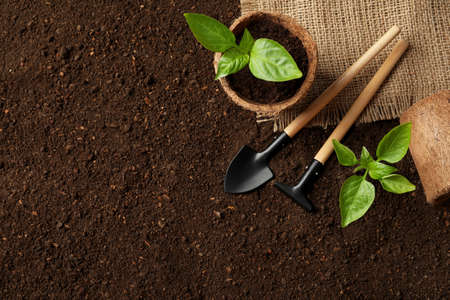 Flat lay composition with seedlings and gardening tools on soil, space for text Stock Photo