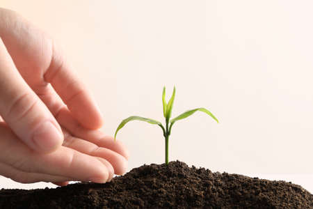 Farmer protecting young seedling in soil on light background, space for text