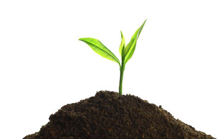 Young seedling in fertile soil on white background