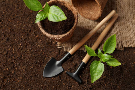 Flat lay composition with seedlings and gardening tools on soil Stock Photo