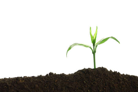 Young seedling in fertile soil on white background. Space for text
