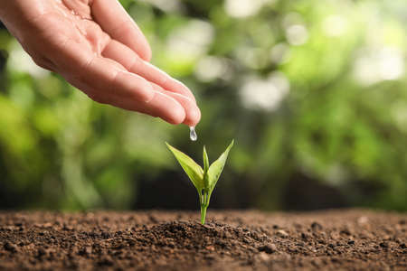 Farmer pouring water on young seedling in soil against blurred background, closeup. Space for text
