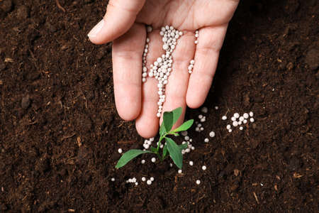 Frau, die Pflanze im Boden düngt, Nahaufnahme. Gartensaison