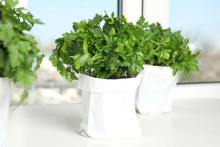 Pots with fresh green parsley on window sill