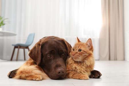 Perro y gato juntos en el piso en el interior. Amigos mullidos Foto de archivo