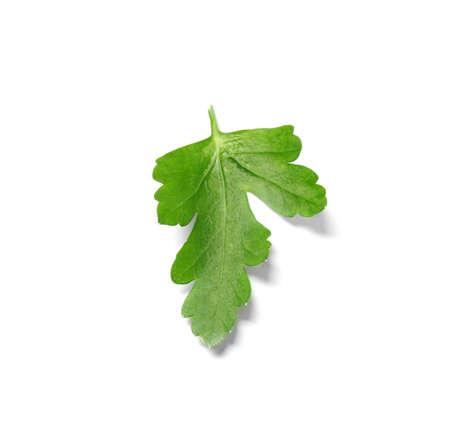 Fresh green organic parsley on white background Stock Photo