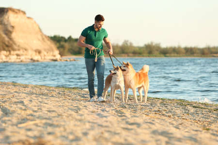 Young man walking his adorable Akita Inu dogs near river