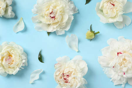 Beautiful peonies on color background, flat lay