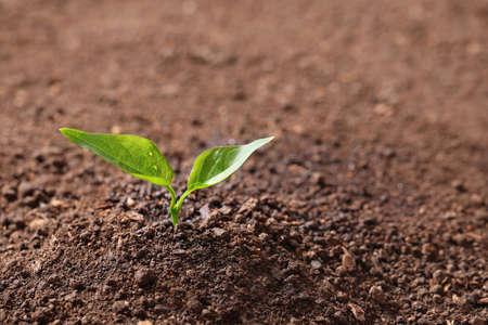 Junge Pflanze in fruchtbarem Boden, Platz für Text. Gartenzeit