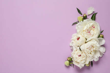 Beautiful peonies on color background, flat lay with space for text