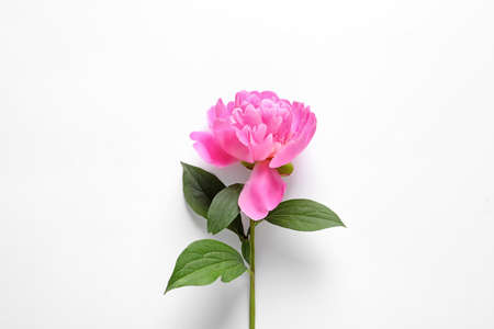 Beautiful peony flower on white background, top view Stock Photo