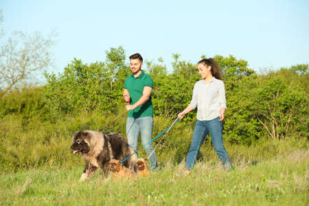 Young couple walking their dogs in park