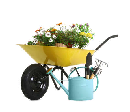 Wheelbarrow with flowers and gardening tools isolated on white