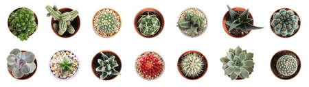 Set of different cactuses on white background, top view. Banner design Standard-Bild
