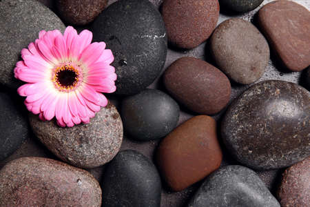 Different spa stones with flower, top view