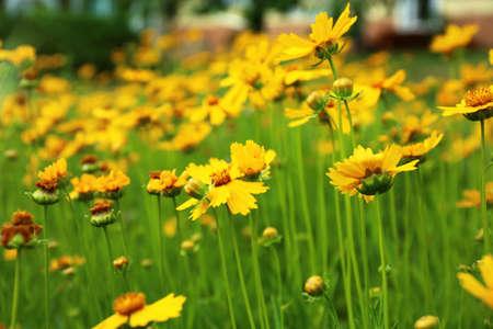 Field of amazing summer flowers. Beautiful nature