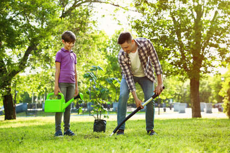 Dad and son planting tree together in park on sunny day