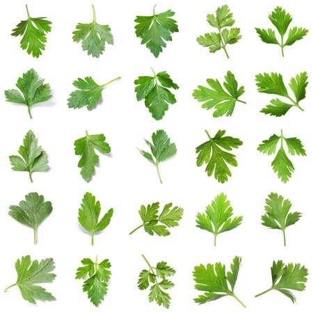 Set of fresh green parsley on white background