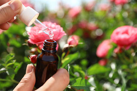 Woman holding dropper and bottle of essential oil near rose bush in garden, closeup. Space for text 写真素材