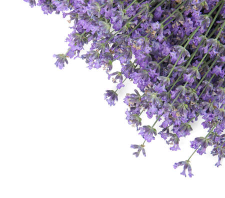 Beautiful tender lavender flowers on white background, top view 스톡 콘텐츠