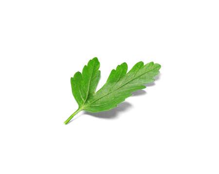 Fresh green organic parsley on white background