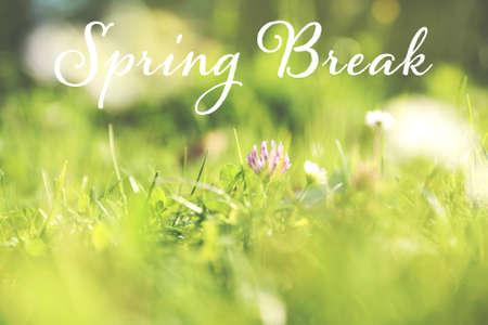 Beautiful green meadow with flowers. Spring Break