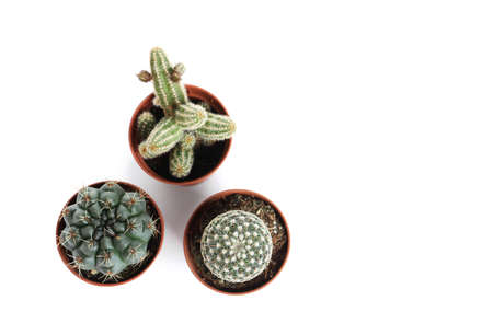 Different succulent plants in pots isolated on white, top view. Home decor Stok Fotoğraf
