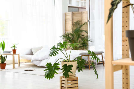 Bedroom interior with indoor plants. Trendy home decor