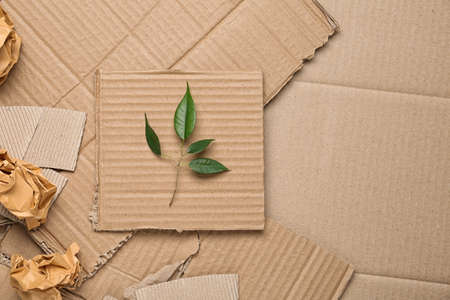Green leaves and crumpled paper on carton, top view with space for text Stockfoto