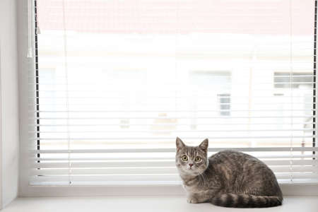 Cute tabby cat near window blinds on sill indoors, space for text