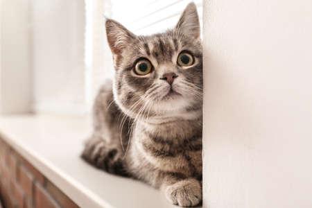 Cute tabby cat near window blinds on sill indoors