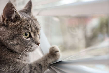 Cute tabby cat near window with blinds indoors, space for text