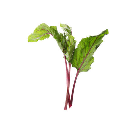 Leaves of fresh beet on white background